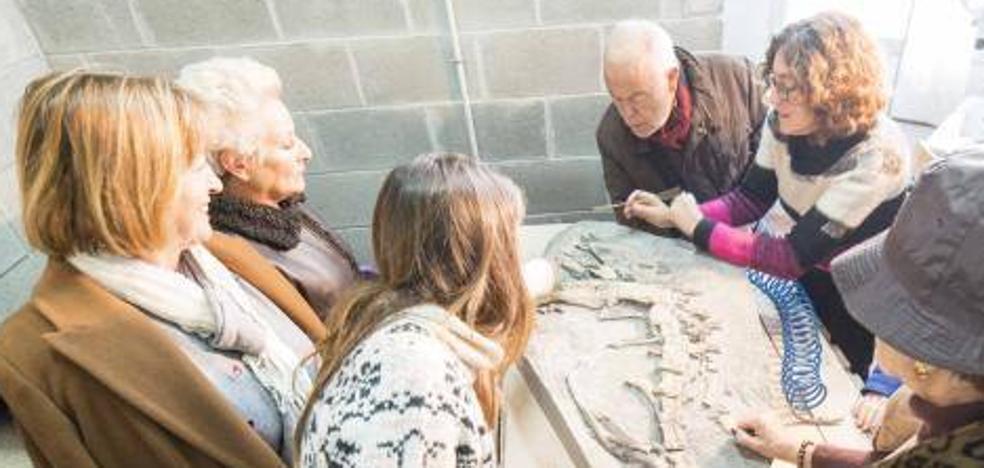 Siete fósiles únicos en el mundo para el Muja