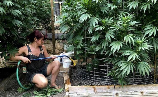 Los médicos dicen que no hay justificación científica para el uso del cannabis