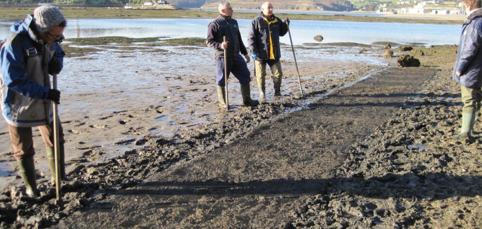 Sueltan 35.000 almejas finas para repoblar la ría del Eo en Punta Peñalba