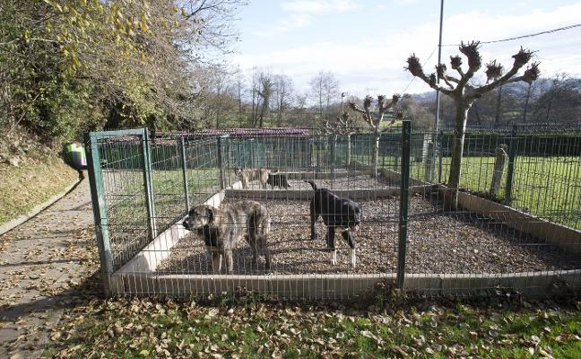 El Xelán logró la salida de 403 animales de los 493 que pasaron por sus instalaciones