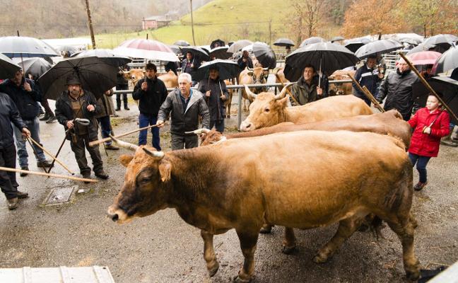 Los ganaderos pusieron a la venta setenta animales en Sellaño, en Ponga