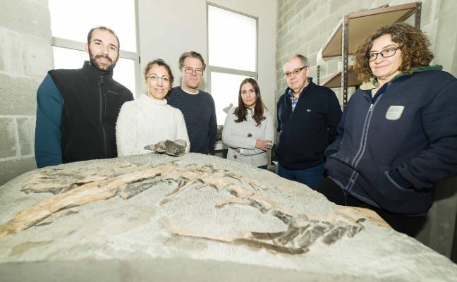 Investigadores alemanes analizan el singular fósil de ornitópodo del Muja