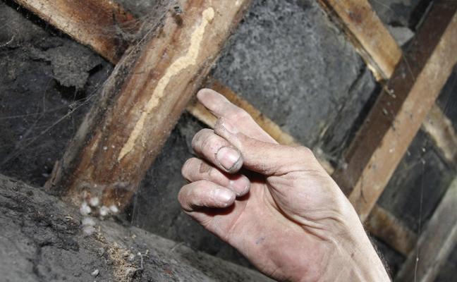 La lucha contra las termitas en Santo Tomás abre una nueva fase