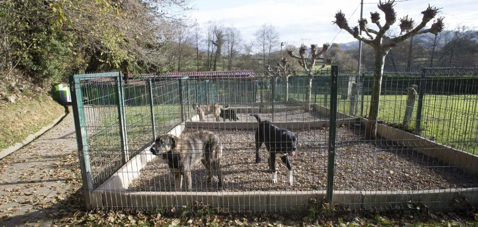 El Xelán dejará de prestar el servicio de recogida de animales en Siero