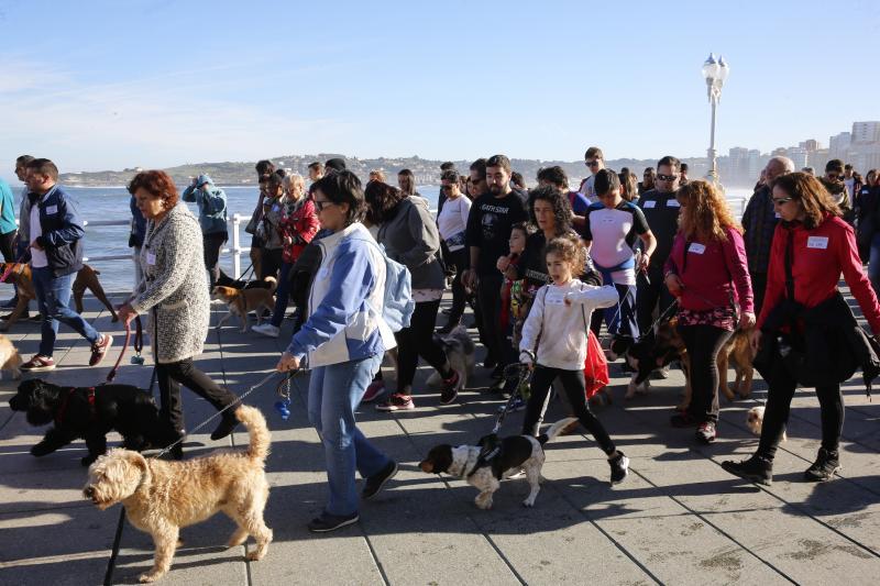 ¿Estuviste en la San Silvestre canina de Gijón? ¡Búscate!