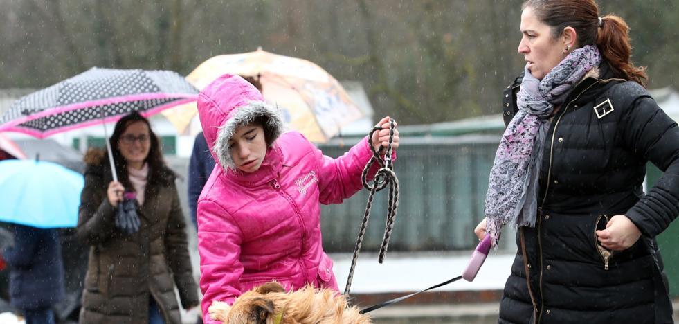 La perrera de Oviedo cobrará por devolver animales extraviados y por los que dé en adopción