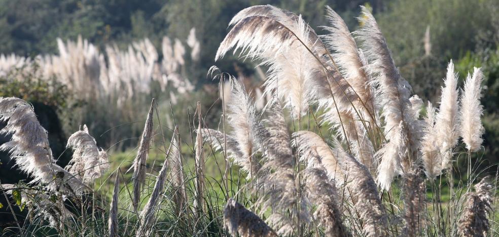 600.000 euros para el control del lobo y la erradicación de plantas invasoras en Asturias