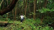 Así es Aokigahara, el misterioso 'bosque de los suicidios'