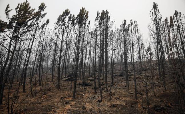 Los incendios quemaron en Asturias 27.799 hectáreas en 2017, un máximo histórico