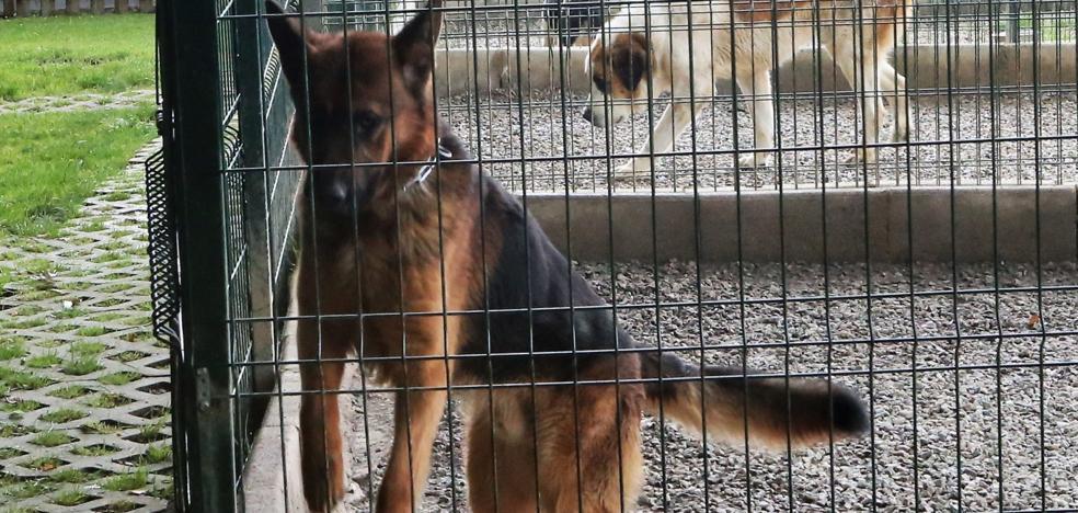 Un centro canino de Porrúa aspira a gestionar la recogida de animales en Siero