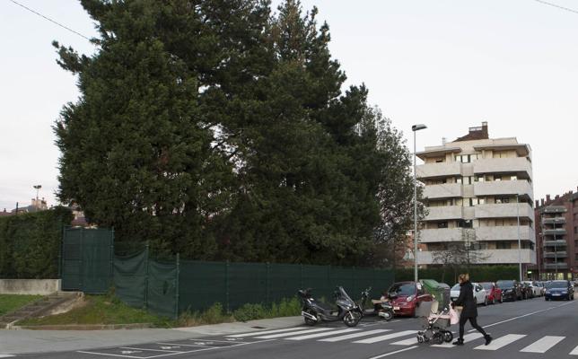 La oruga procesionaria obliga a talar tres pinos de la calle Corín Tellado de Gijón