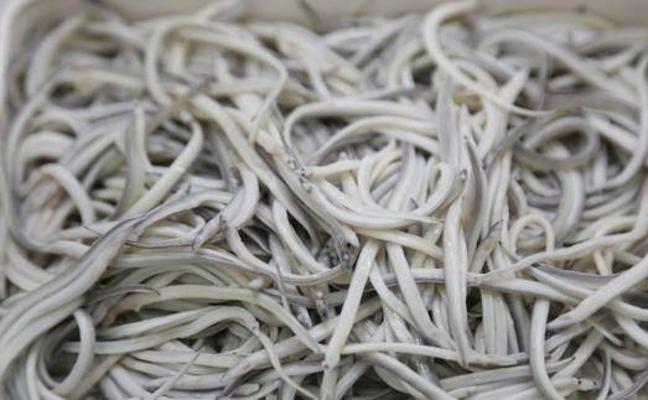 Decomisan veinte kilos de angulas vivas a dos pasajeros que volaban a Hong Kong