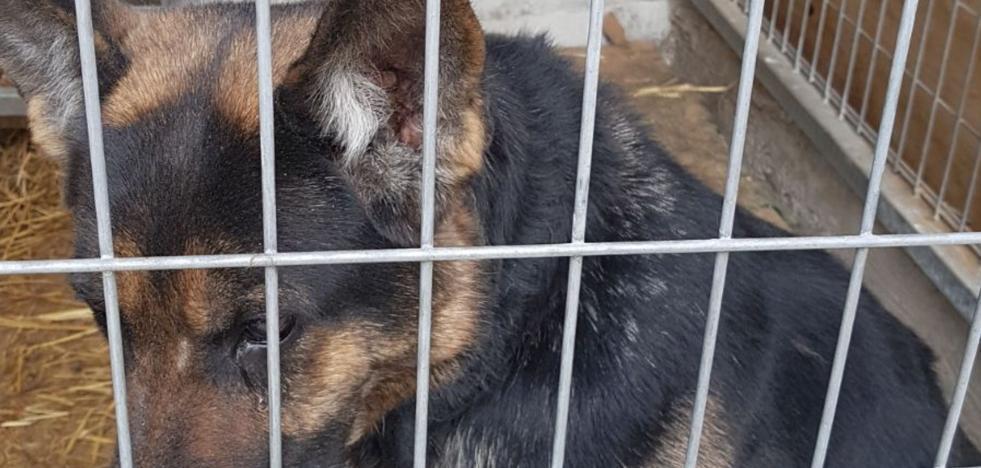 La protectora Arriguau insta a Parres a firmar el convenio de atención a animales