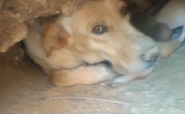 Detenidas tres personas por sepultar vivos a nueve cachorros
