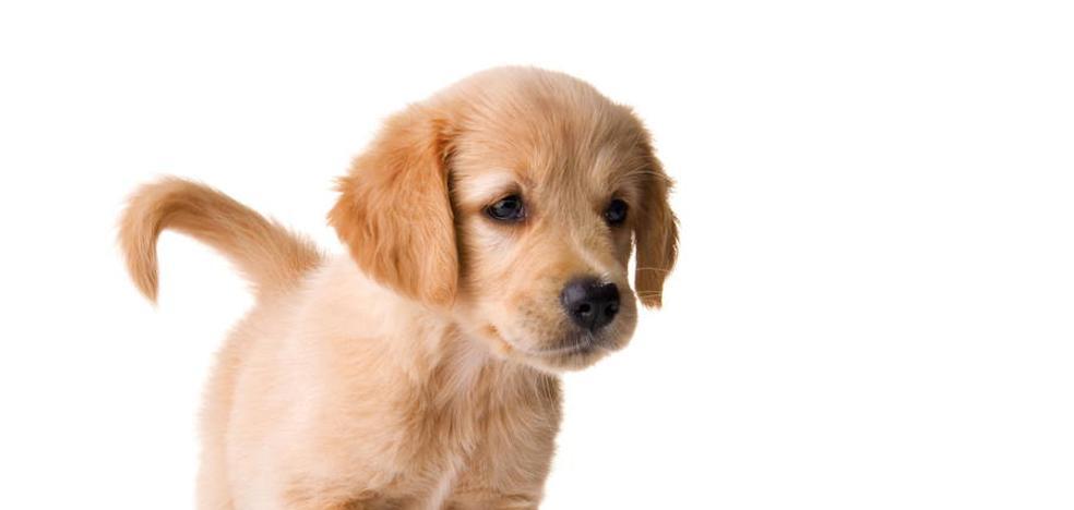Entra en vigor la prohibición de cortar el rabo o las orejas a las mascotas