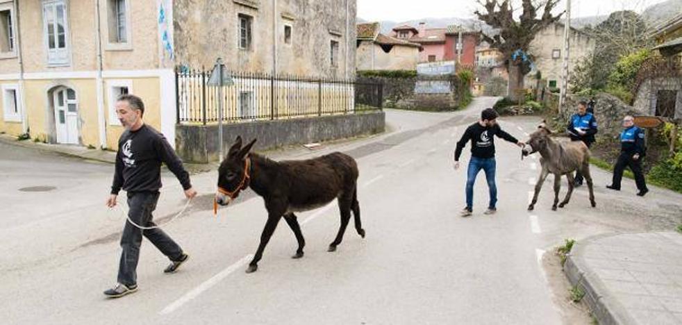 Mundo Vivo denuncia el robo de los dos burros rescatados en Porrúa