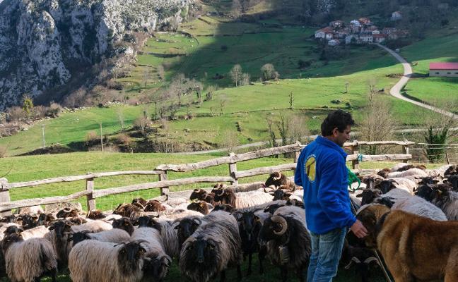 Ganaderos de Picos lanzan una marca de carne para asegurar la biodiversidad