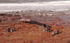Aparece muerta una ballena de 18 metros en una playa de Caravia