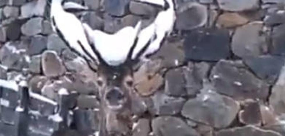 Las espectaculares imágenes de un venado huyendo de la intensa nevada