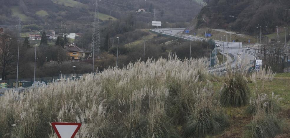 La campaña contra el plumero de la Pampa se amplía a las grandes empresas