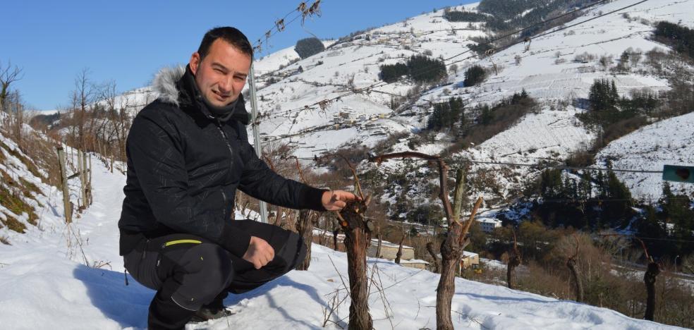 La nieve sacia la sed de los viñedos de Cangas