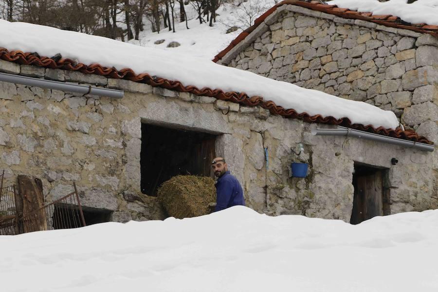 Los pueblos de Oriente de Asturias recuperan la normalidad tras las nevadas