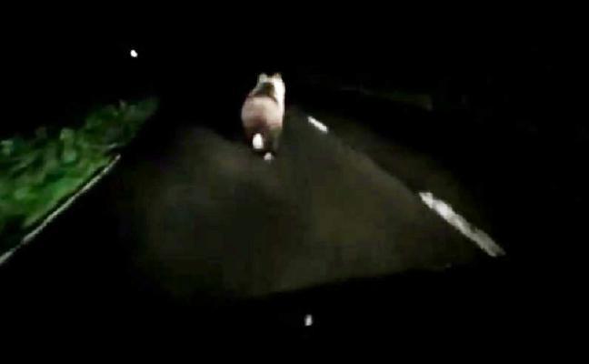 Un oso en mitad del camino