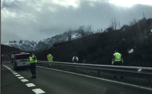 Un caballo obliga a cortar el tráfico varios minutos en la autopista del Huerna