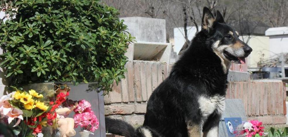 Muere 'Capitán', el perro que veló durante una década la tumba de su amo