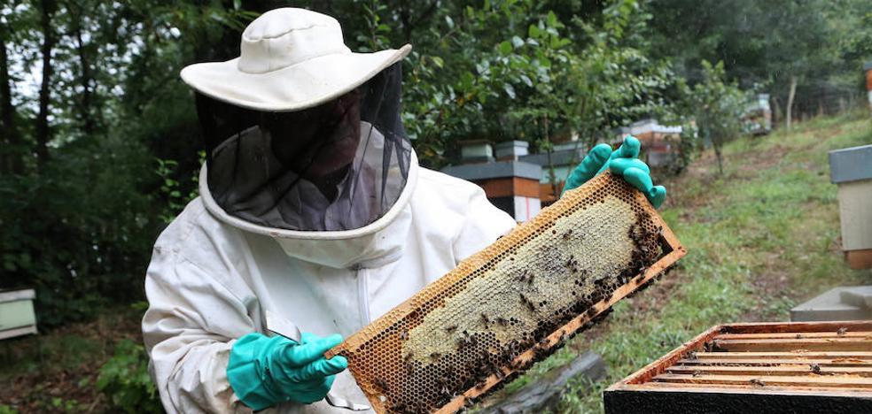 Los apicultores asturianos, molestos con el reparto de las primas de polinización