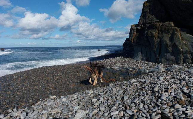 La Corporación de Valdés defiende autorizar perros en dos playas