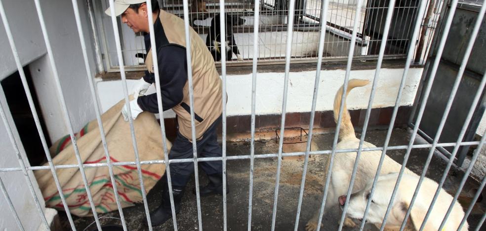 El albergue municipal de animales reduce a la mitad la ocupación de perros y gatos