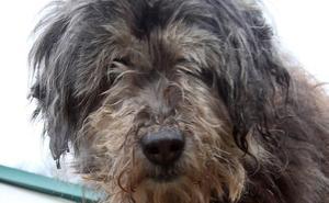 'Pochi' , una perra «milagro» de 18 años
