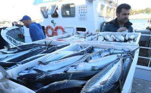 Los pescadores asturianos se sienten discriminados por la escasa cuota de xarda