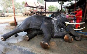 Botsuana acusa a Estados Unidos de «alentar» la caza furtiva de elefantes