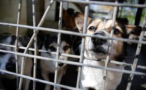 El consorcio para construir el albergue de animales de Avilés se constituye este martes