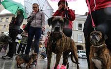 El consorcio de la perrera consultará a Corvera, Pravia y Gozón si se incorporan