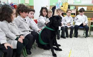 Lluvia, la maestra asturiana de cuatro patas