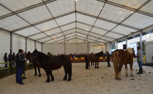 Más de 200 equinos se citan en la Feria del Caballo belmontina