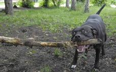 Un perro mata a su dueña y al hijo de esta en Alemania