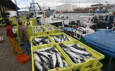 Pesca advierte de que alterar ahora la cuota de xarda para la flota asturiana sería «ilegal»