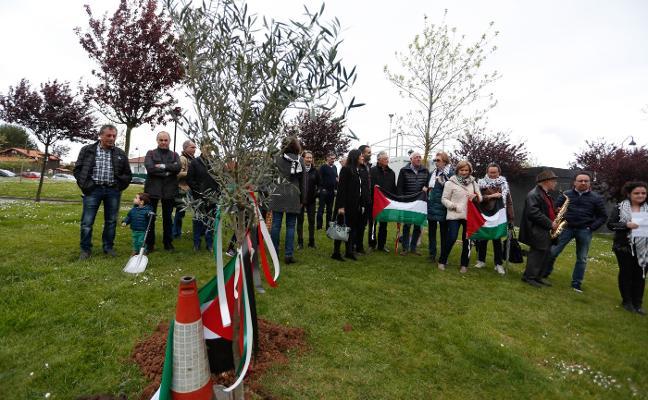 Castrillón también planta un olivo por Palestina