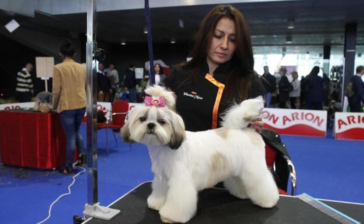 Los perros se peinan en Principets
