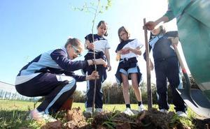 200 árboles más para los jardines de Oviedo