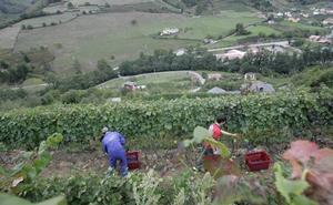 Asturias y Cantabria se alían por sus viñedos