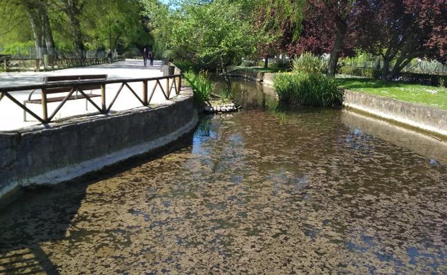 Malos olores en el entorno del Parador Molino Viejo por la Canal del Molín