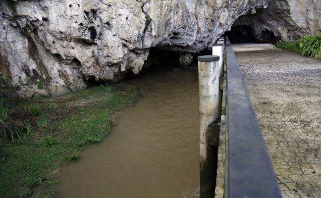 Los purines del río San Miguel, las visitas y los eucaliptos ponen en riesgo Tito Bustillo