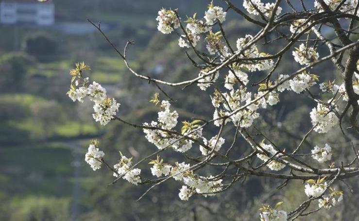 Tiempo de espicha en Asturias