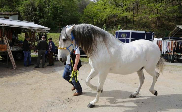 Más de cien caballos se exhiben en Cangas de Onís