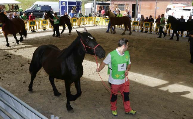 Más de cien caballos en Cangas de Onís